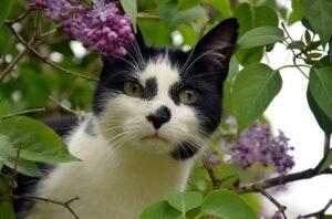 cat-effect-blog